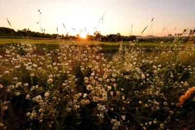Sapanta Workshop eco-fotografiere si descoperire