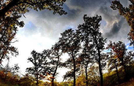 Padurea de Stejari de la Sapanta